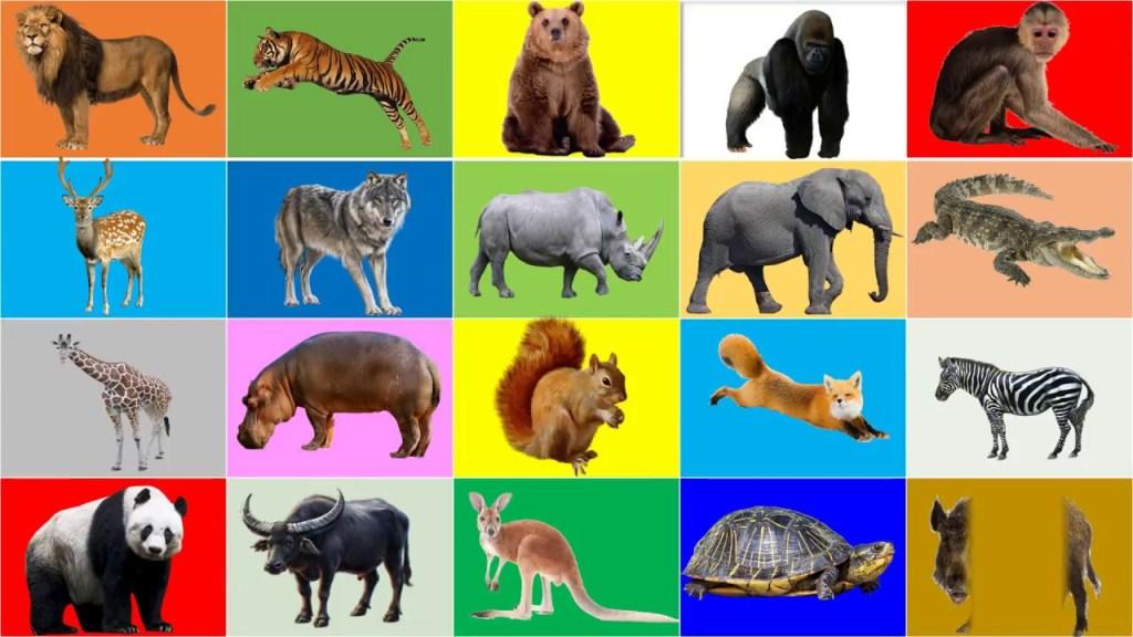 მსოფლიოში ცხოველების პოპულაცია 68 %-ით შემცირდა