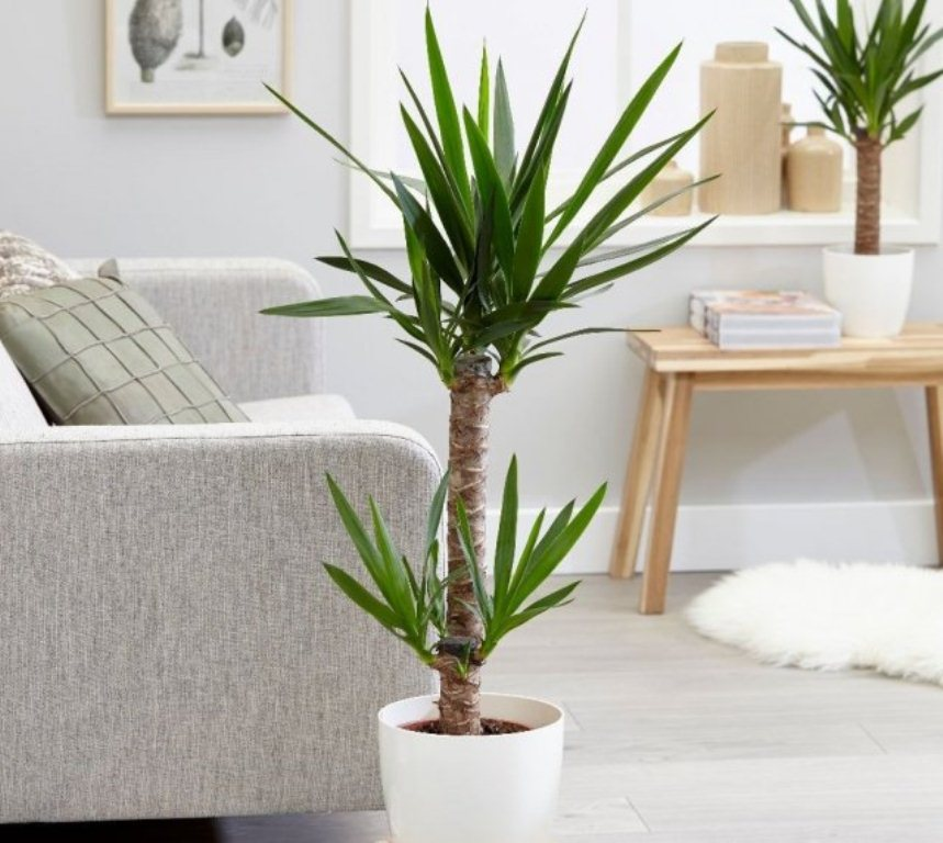 რომელი სახლის მცენარეები ასუფთავებენ ჰაერს მავნე აირებისგან